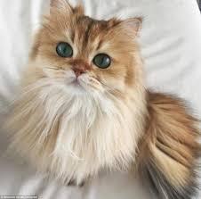 instagram cat smoothie netherlands puss