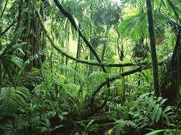 Tropical Rainforest Plant List - what is a rainforest rainforest animals costa rica and