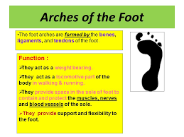 Foot Anatomy Nerves Clinical Anatomy Of The Foot Ppt Video Online Download
