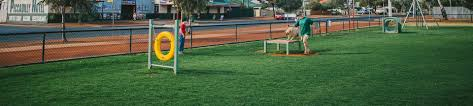 play equipment for dogs australia the best equipment in 2017