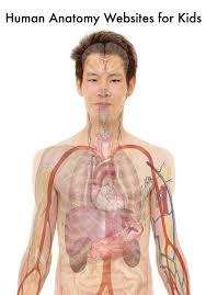 Anatomy Of Human Body Organs The 25 Best Human Body Organs Ideas On Pinterest Organs Of