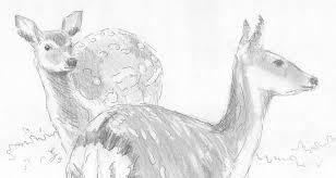 deer pencil drawing drawing by mike jory
