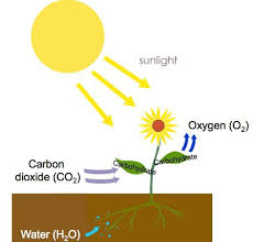 What Happens During The Light Reactions Of Photosynthesis 30 Best Biology Class Images On Pinterest Life Science Biology