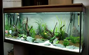 Decoration Of Fish Tank Freshwater Aquarium Design Ideas Related Post From Fish Tank