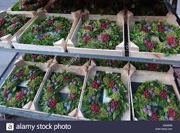 fresh garland wreath holy berry berries