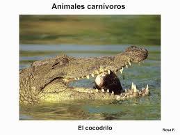 imagenes de animales carnivoros para imprimir maestra de primaria animales carnívoros vocabulario en imágenes