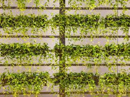37 house plants perfect for terrariums realestate com au