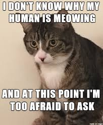 Funny Confused Memes - confused cat meme cat stuff pinterest confused meme and cat