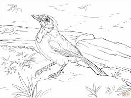 free coloring pages of birds stunning realistic bird coloring pages images new printable