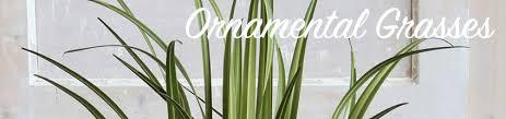 buy artificial ornamental grasses bakker