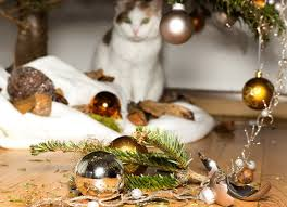 cat christmas can cats and christmas trees co exist petmd