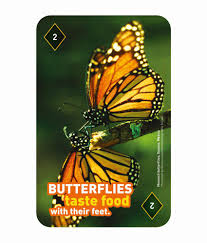 mufubu designs national geographic 52 fun facts playing cards