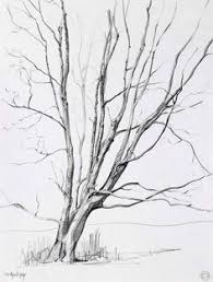 pictures pencil sketches of trees drawing art gallery