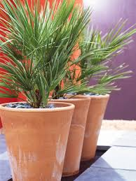 planting tips in large outdoor planters front yard landscaping ideas