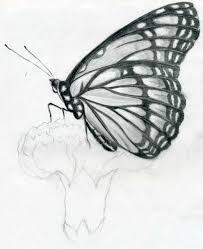 foto alverose pencil drawing painting art sketches of cute animal