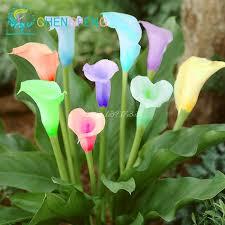 calla bulbs promotions 100pcs bag 24 colours calla seed bonsai