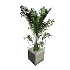 png pflanze house palm 1000 png