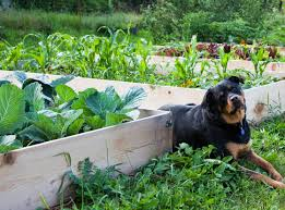 What To Plant In Your Vegetable Garden by Should I Grow Fruit And Vegetables In Drought Install It Direct