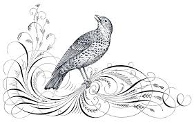 free antique clip art calligraphy flourishes bird