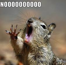 Nooo Meme - nooo squirrel meme generator