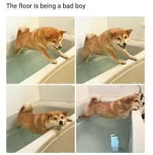 Dog Doctor Meme - just 33 hilarious dog memes