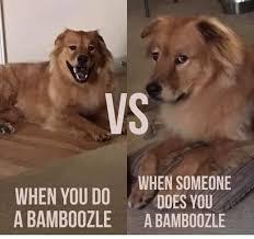 Silly Dog Meme - late night silly dog meme steemit