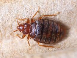 National Bed Bug Registry The Bed Bug Registry Searchable Database Of Infestations