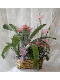 Plant Delivery Green Plants Pasadena Flowers Plants For Delivery