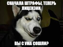 Siberian Husky Meme - create meme dog podozrevala comics dog husky pictures meme