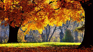 forest leaf beautiful trees golden scenery scenic nature bright