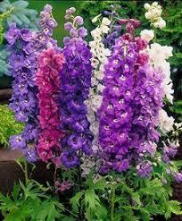 Flower Love Pics - 47 best flowers that love full sun images on pinterest flower