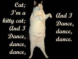 Kitty Cat Memes - image 26699 kitty cat dance know your meme