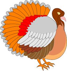 Thanksgiving Bird View Thanksgiving Turkey Free Vector Graphic On Pixabay