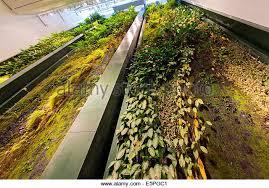 living vertical wall garden stock photos u0026 living vertical wall