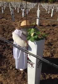 The Trellis And The Vine Mount Saint Joseph Wines News