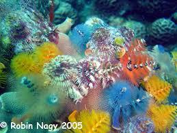 tree worms saltwaterfish forum