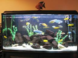 image of fish tank decoration ideas fish tank decorations