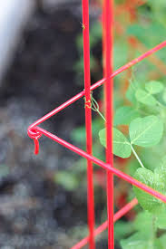 amazon com tall expandable pea trellis trellises garden