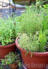 container herb garden the container herb garden choosing culinary
