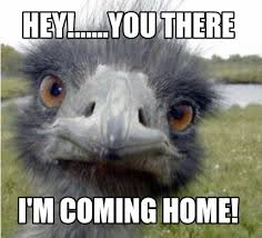 Hey You There Meme - meme creator hey you there i m coming home meme generator