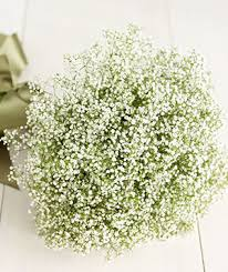 baby s breath flowers calgary weddings rethinking baby s breath flowers calgary weddings