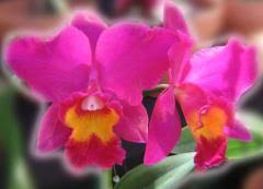 orchids ecards free greeting cards with beautiful orchids