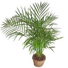 plante de bureau feng shui feng shui les plantes mode d emploi