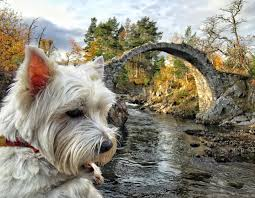 Scottish Rock Garden Forum by About Me U2013 Scotland With The Wee White Dug