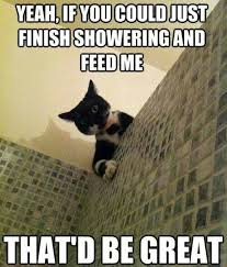 Sneaky Cat Meme - sneaky cat animaniacs pinterest cat funny animal and animal
