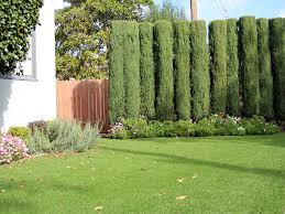 Florida Front Yard Landscaping Ideas Fake Grass Cloud Lake Florida Lawn And Garden Front Yard Landscaping