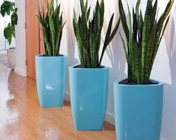 plants for office indoor plants indoor office interior plants phs