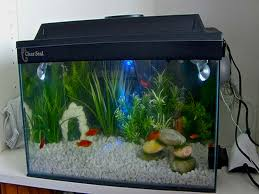 oscar fish tank decorations