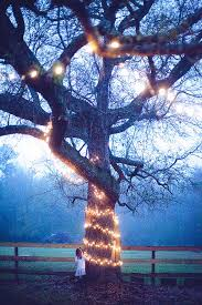 Backyard Wedding Lighting Ideas by 865 Best Outdoor At Night Part 1 Wedding Backyard Party Etc