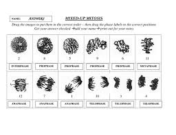 mixed up mitosis by docras teaching resources tes